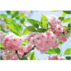41-0226-FG Фотообои DECOCODE Яблони в цвету (4,00*2,8)
